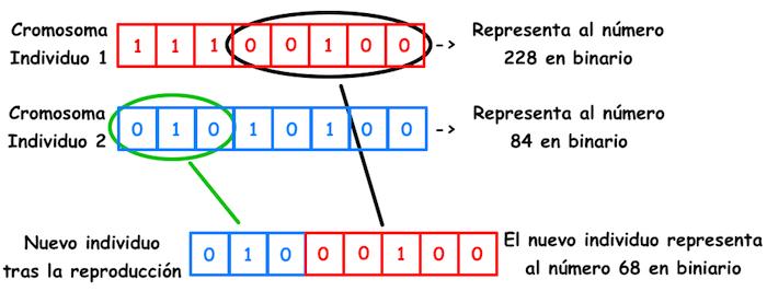 Reproduccion_CE_jarroba.com